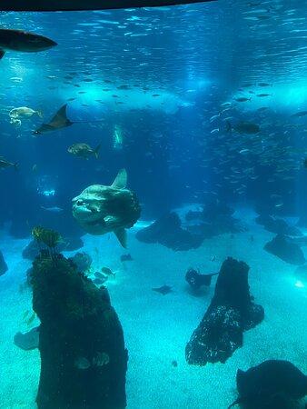 Magnificent oceanarium