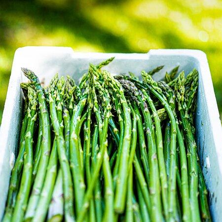 Friskplukkede asparges fra Møn Økologisk