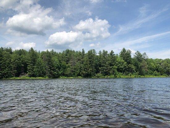 Gale Meadows Pond