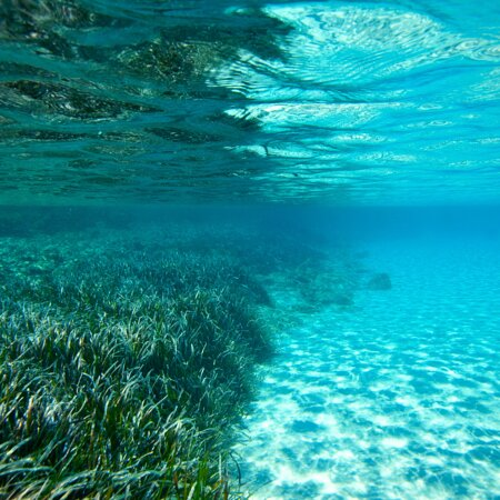 We want to help @ibizapreservation to promote A MORE SUSTAINABLE FUTURE FOR IBIZA & FORMENTERA. How? At the time of confirming and/or paying for the charter we will invite you to support their work by adding a voluntary donation of €10 to the final bill. The amount raised will be used to co- finance #Posidonia protection projects developed in conjunction with their partner #Vellmarí!! Let's enjoy the sea and protect Posidonia!! 🌱🌱