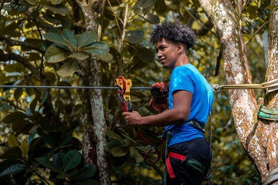 Pointe-Noire, Guadeloupe : Bienvenue au Tapeur au cœur de la forêt !