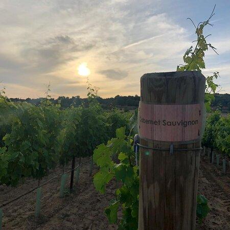 Your wine 🍷   Your piece of Mallorca 🏝 g r a p e v i n e s p o n s o r s h i p DE.WeinFeldSineu.com EN.WeinFeldSineu.com weinfeld.sineu@gmail.com P҉R҉E҉-O҉R҉D҉E҉R҉ & P҉A҉Y҉ L҉A҉T҉E҉R҉ DE.WeinFeldSineu.com/pre-order EN.WeinFeldSineu.com/pre-order You could find us on INSTAGRAM: instagram.com/Weinfeld.Sineu ☀️ #weinfeldsineu #mallorca #redwine #whitewine #wine #rebenpatenschaft #grapevinesponsorship #blancdenoir #rotwein #weißwein #weinstock