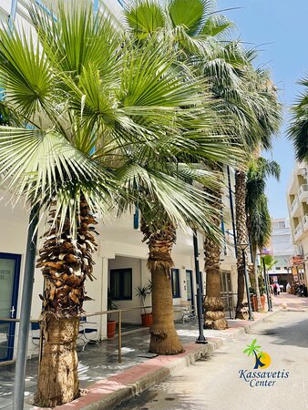 Just another day under the palm trees @kassavetiscenter 🏝 🌴   #palmtree #palmtrees #beach #nature #planting #travel #palm #summer #vacation #exotic  #tropical #palms #paradise #beachlife #ig # #beautiful #green #bhfyp #visitgreece  #Kassavetishotel #Kassavetiscenter #Kassavetis #Hersonissos #Crete #Greece