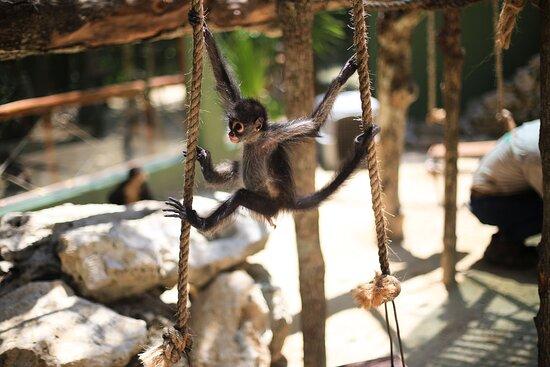 Akumal Monkey Sanctuary & Rescued Animals