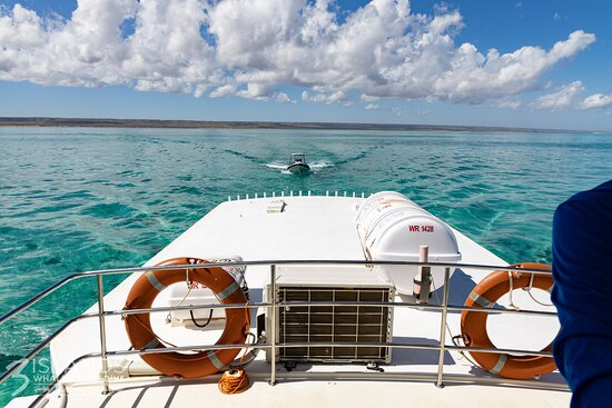 Cruisin' the turquoise waters of Ningaloo