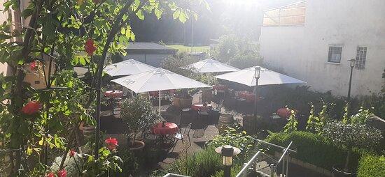 Sommer im Weingarten