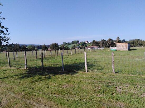 Fournols, Francia: une mini ferme est intégrée au centre(vaches,moutons, chevres,lapins et poules)