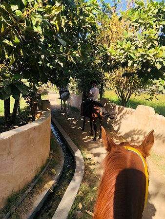 Horse riding in Hatta… the place called HattaFort!