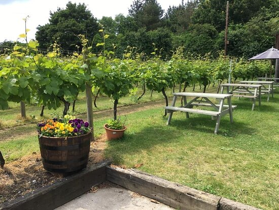 Part of the overflow from the wine garden