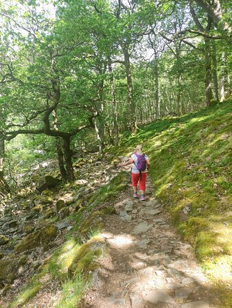 following the Ullswater Way - one of my favourite part of the walk was in these woods!
