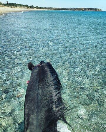 #rockinghorsebeachranch #horseridingrhodes