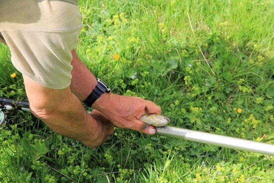Bedretto, İsviçre: Altra trota ed altra misurazione.....