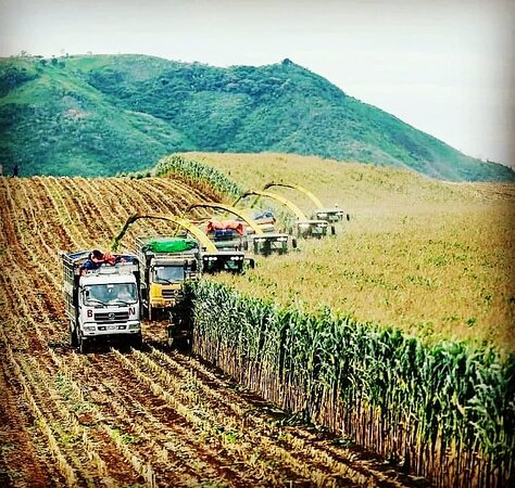 Dong Du Organic Farmstay
