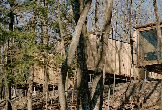 Enjoy your private cabin floating among the trees, statuesque and serene.
