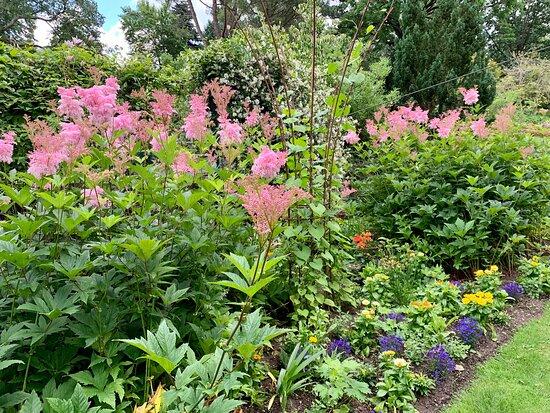 Parterres de fleurs au mois de Juin