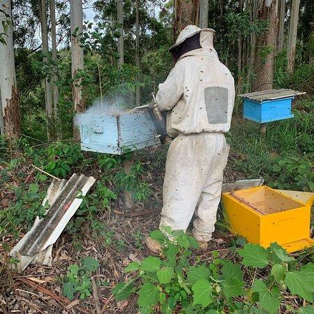 apicultor fazendo manutenção no apiário