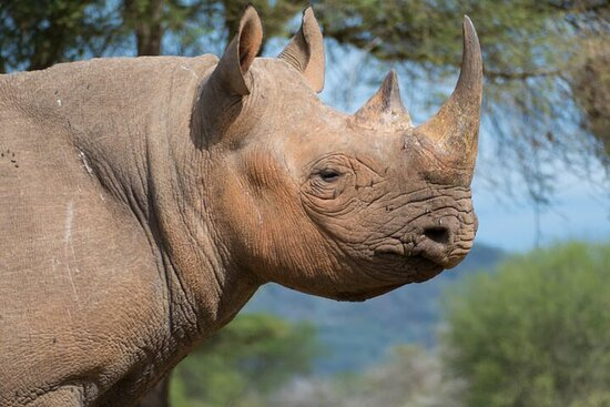 Safari della fauna selvatica del Parco nazionale Mkomazi di un'intera