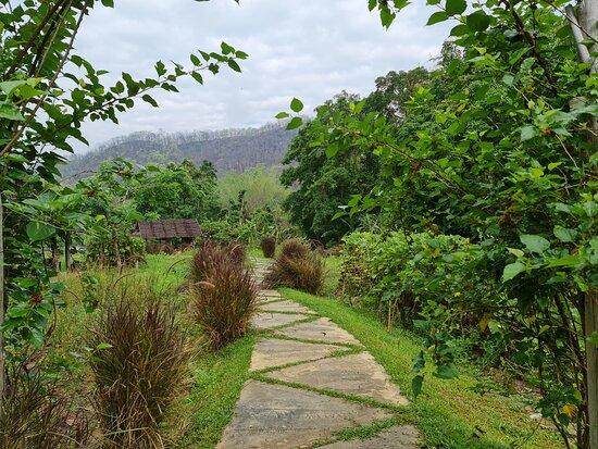 ถัดจากบริเวณนาข้าวและแปลงผัก ท่านสามารถเดินเล่นมาได้เรื่อยๆ จรด สุดทาง จะได้เห็นต้นไม้แปลกๆ และ ธรรมชาติ ที่ยังคงสะอาดและบริสุทธิ์ ครับ