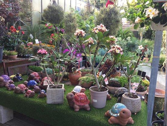 Nous réalisons avec passion toutes vos envies fleuries...