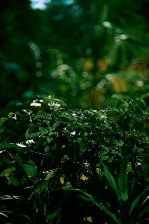 JA Manafaru I Natural Gardens & Flora