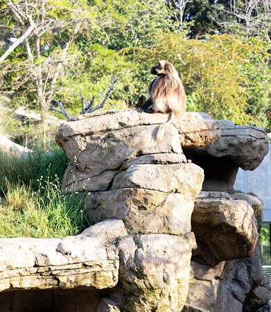 San Diego Zoo 1-Day Pass Ticket, No Reservations Required!: mono