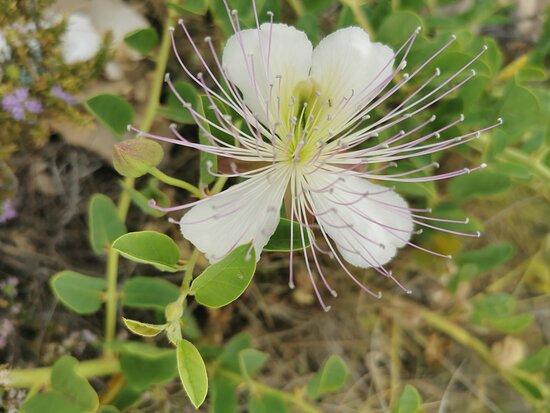 Cala Del Moral, Ισπανία: Original flor.