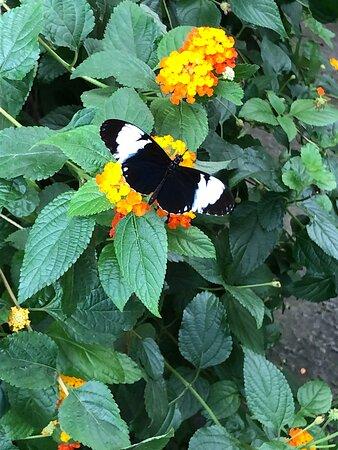 Mooie vlinder in mangrove