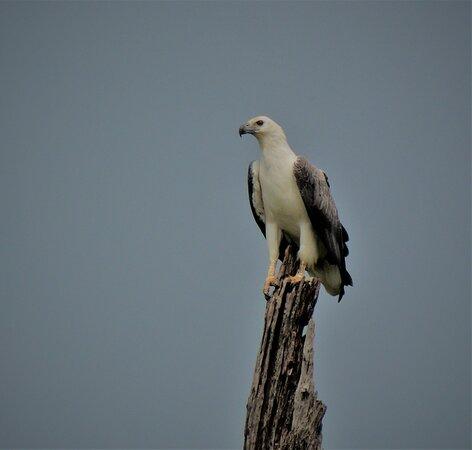 Birding With Vernon