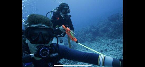 Underwater reef surveys with Aquatic Life Divers