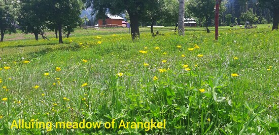 Azad Kashmir, Paquistão: Arang Kel a destination, you reach after hicking a steep hill, tests your courage & stamina simultaneously but it is a place worth to be, you dont want to come down once you reach this bewitching meadow.