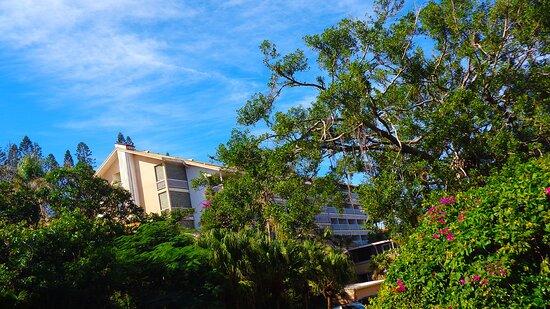 ╭▥◻ LE SURF HOTEL  ♠ Left Wing  ♠▪ ▫ NEW CALEDONIAN Historical Heritage ◻▥╮Anse Vata bay 🔴⚆