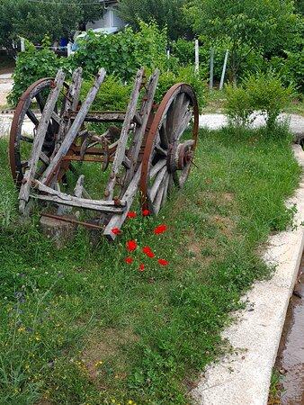 כרכרת וינטג' בגינה