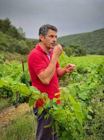 Thomas MONTAGNE, notre vigneron passionné