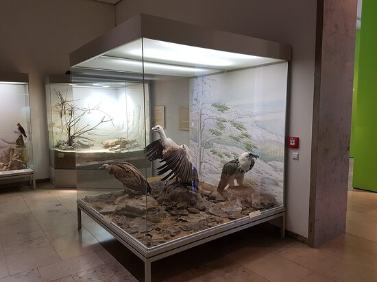 State Museum of Natural History Karlsruhe