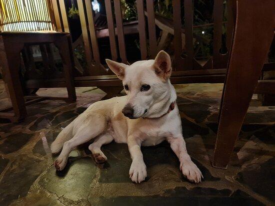 น้องหมา สโนไวท์ ก็จะคอยมาป้วนเปี้ยนอยู่ที่ห้องอาหาร แต่เค้ามีมารยาทนะ มานั่งสำรวจและดูแลเฉยๆ ไม่ได้ขออาอาหารกินแต่ประการใดครับ