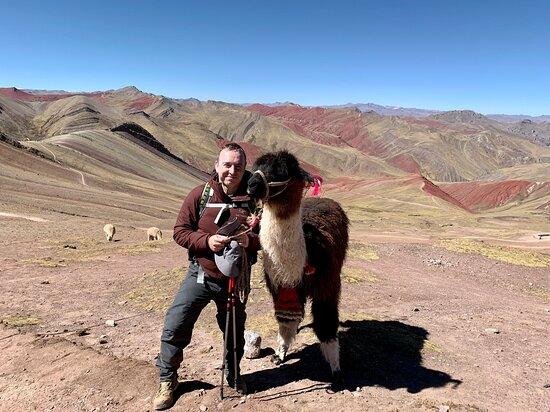 llamas and alpacas thrive all around the area