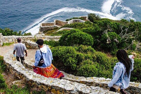 Tour della Penisola del Capo: Cape Point e pinguini con un fotografo