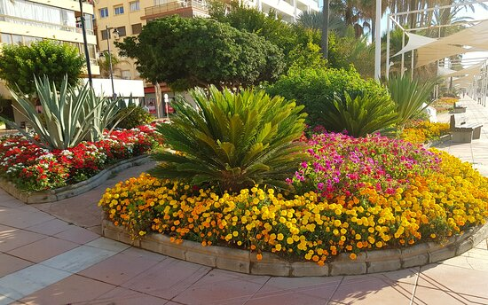 Flowers and giant chess on the promenade