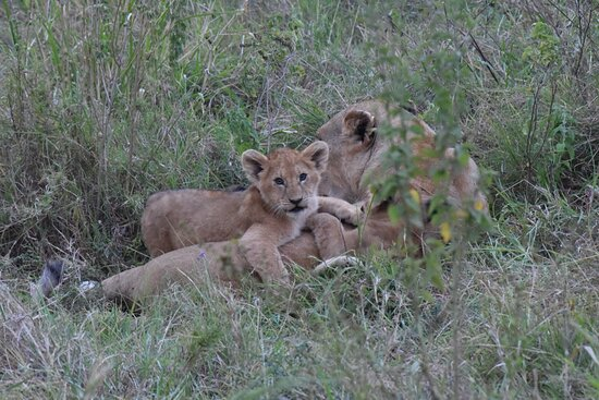 the main goal of the guide is to show nature from its best side and as many of its manifestations as possible.  Serengeti. Central Part