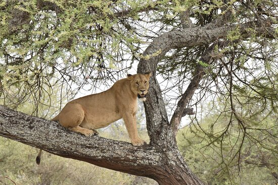 the main goal of the guide is to show nature from its best side and as many of its manifestations as possible.  Tarangire.