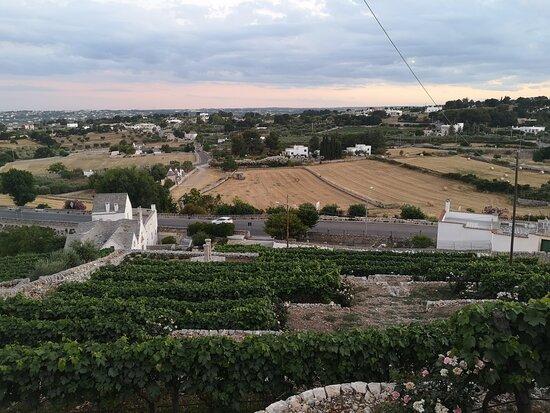 Azienda Agricola Bufano