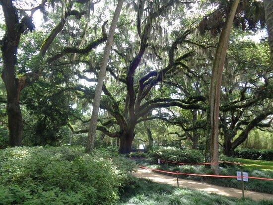 trails through the oaks