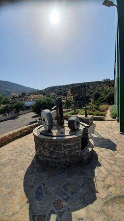 Olive oil park-free olive oil tour