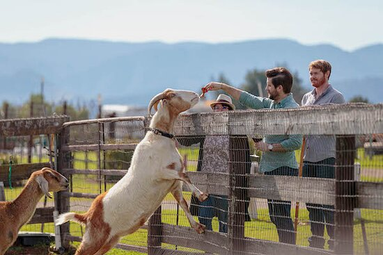 Book a private tour and tasting at our estate property, where you'll be able to feed our super friendly pet goats!