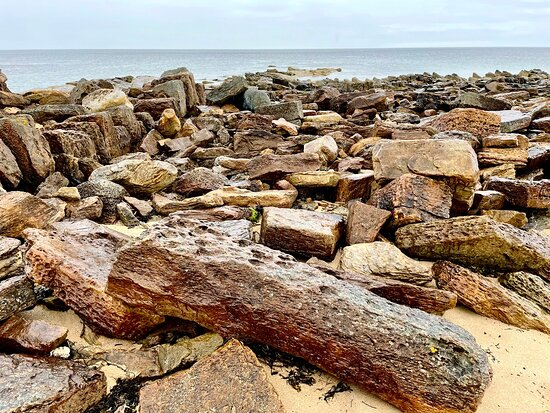 Fossils have been found here dating back to the late Carboniferous period ( approximately 310 million years ago) when Scotland was near the equator and had humid swampy conditions . Have an interest in geology (though know next-to-nothing) and to the untrained eye these rocks in situ on the beach look like they could be fossilised/petrified wood  - but don't know. It was interesting searching for them nevertheless, and wondering about their origins.