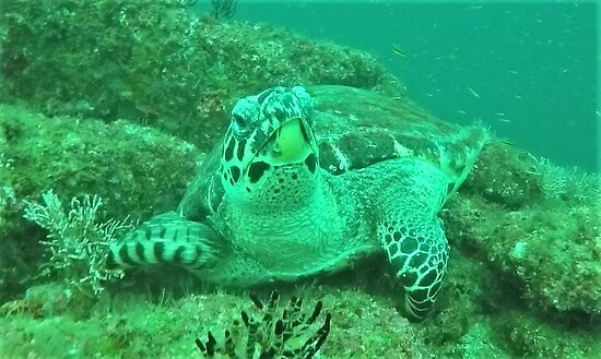 Scuba Diving Tour - Majahuitas: This Sea Turtle was a photo ham just letting us get up close and personal.