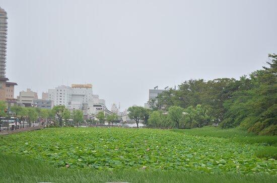 אקיטה, יפן: 公園