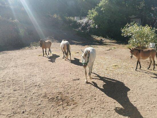 Rincon de la Victoria, إسبانيا: Los 🐴 🐴 🐴 🐴 y el potrillo en el corral.