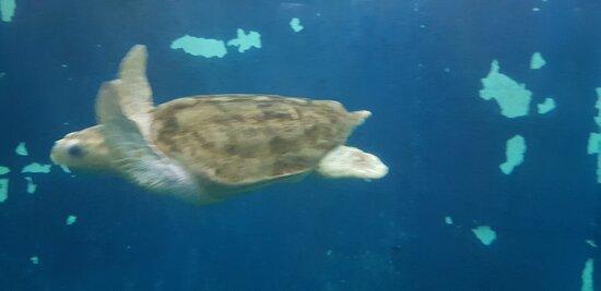 Grand aquarium de Saint-Malo (1)