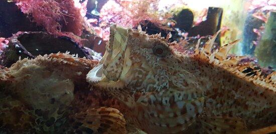Grand aquarium de Saint-Malo (2)